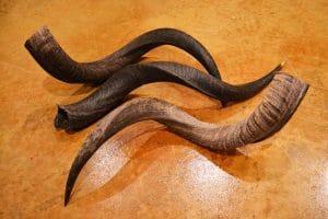 shofars